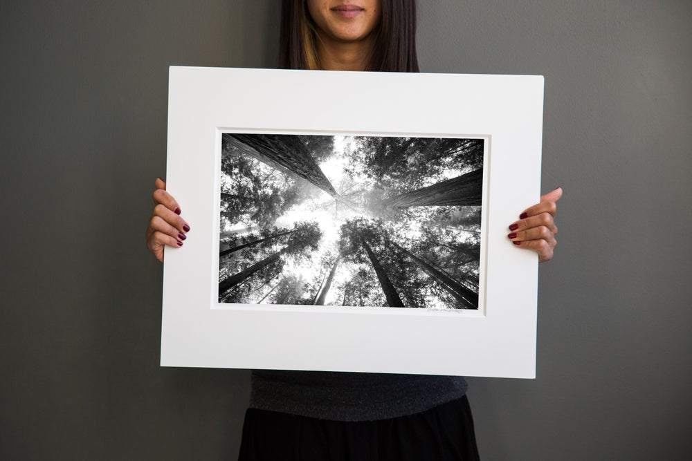 Image of Redwood Forrest