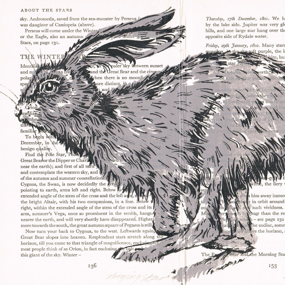 Image of BOOK PAGES, HARE