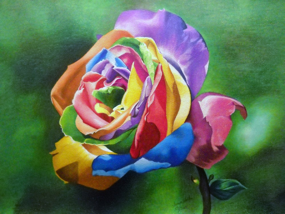Image of Colorful Rose