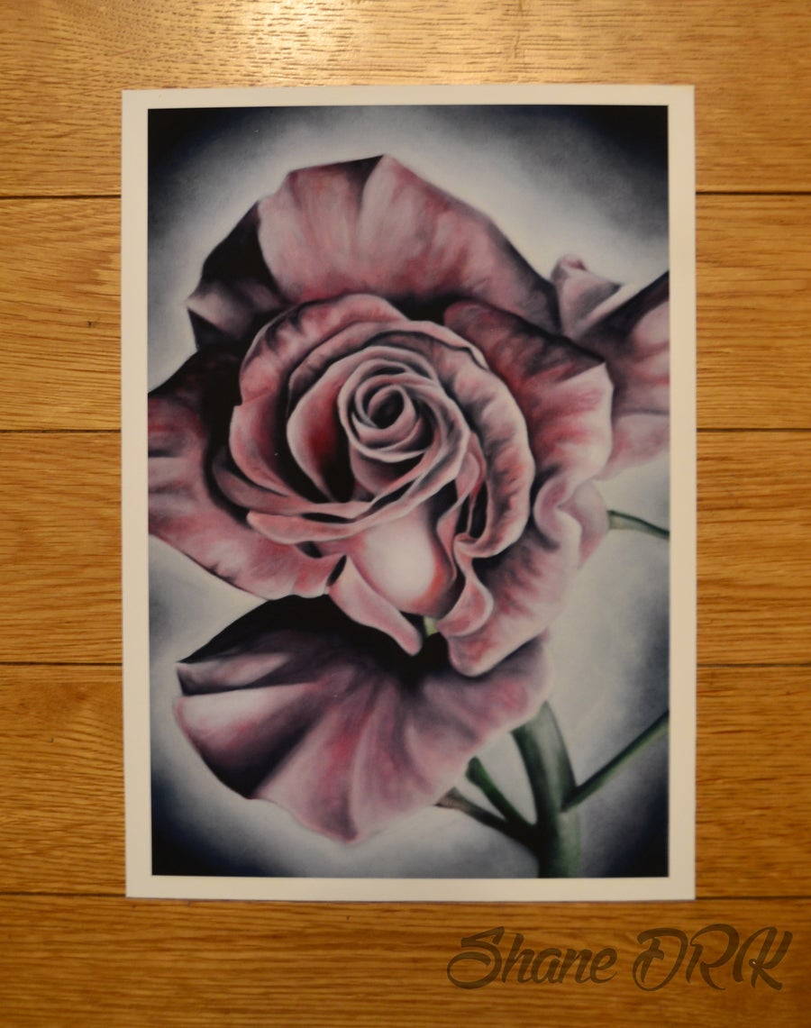 Image of Winters rose - A4 print