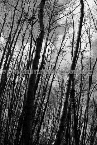 Image of A4 Framed Print of 'Winter Trees'