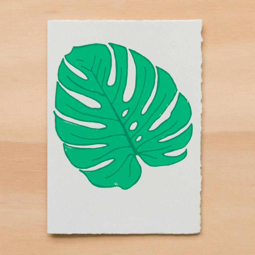 Image of Monstera Leaf