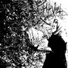 "Harvest - ""Forgotten Vampyres of the Melancholic Night"" CD"
