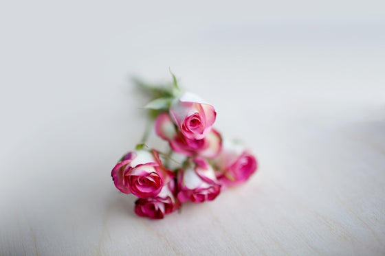 Image of Delicate Pinky