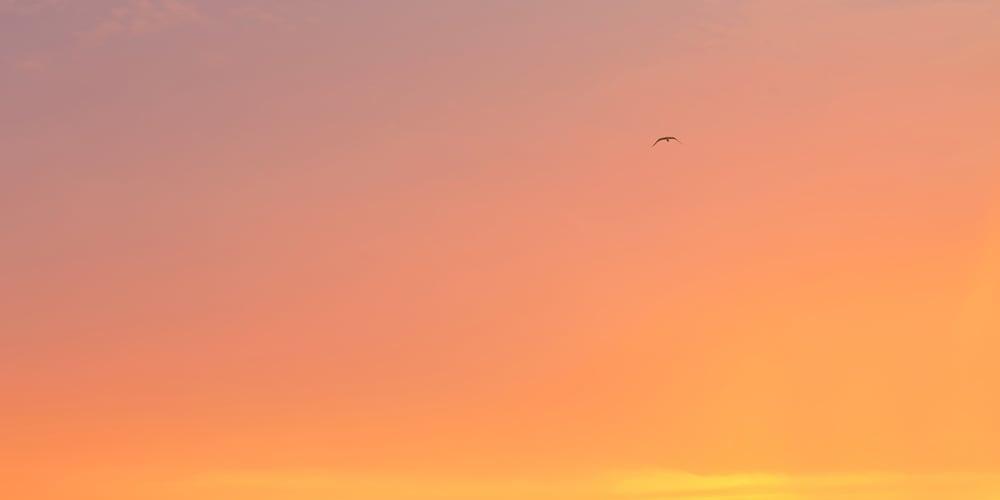 Image of Bird in the Sky