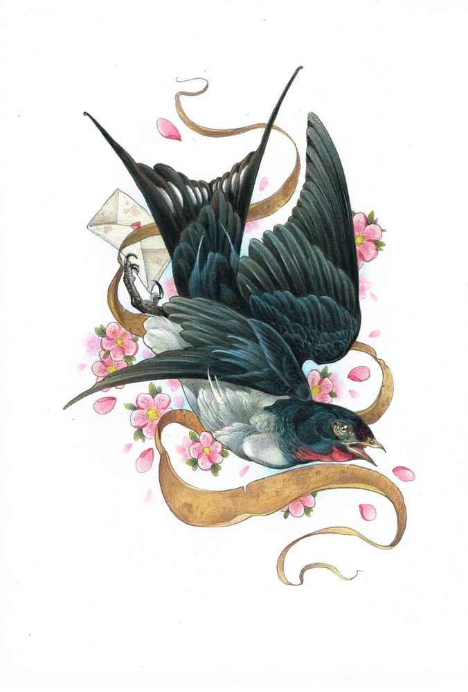 Image of A3 Swallow print by James Robinson