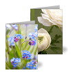 Image of Botanical Photography Greetings Card