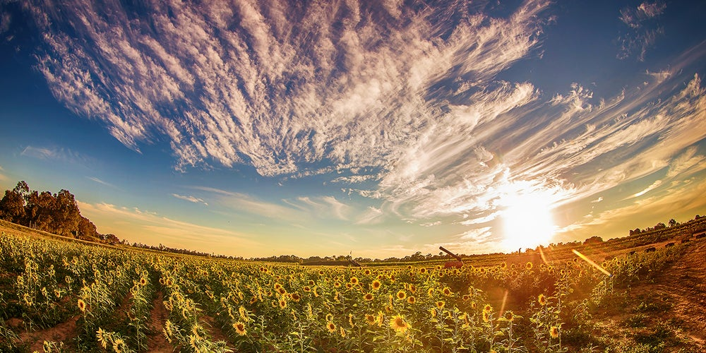 Image of Warmth & Sunflowers