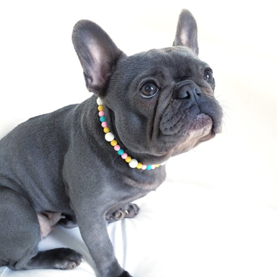 Image of Margate White ~ White, Pale Pink, Yellow & Turquoise Beaded Dog-Necklace
