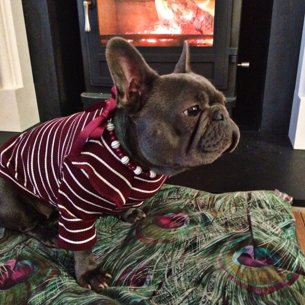 Image of Arabella, Burgundy ~ Burgundy, White striped Ribbon Tie Beaded Dog-Necklace