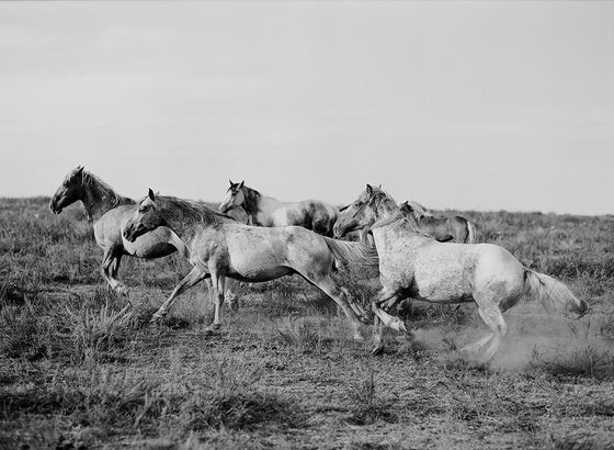 Image of mustangs of the west no.2
