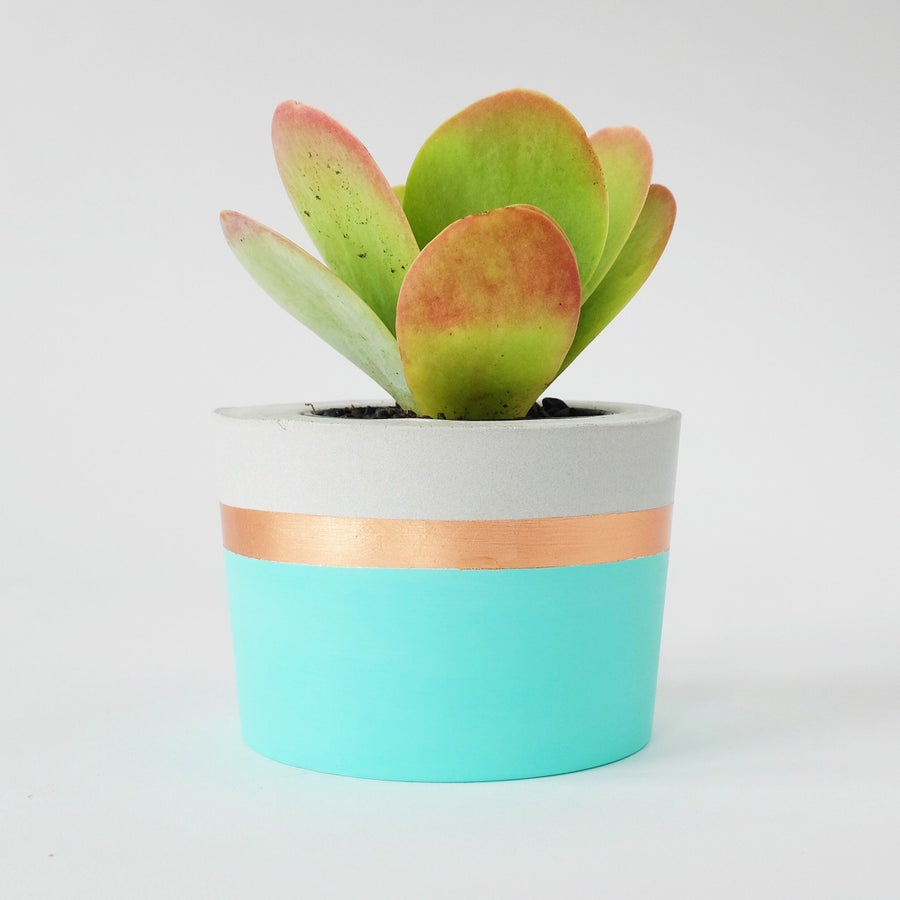 Image of Planter - Round [Mint & Rose Gold]