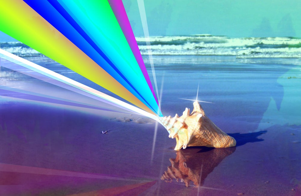 """Image of Sparkle Seashell 