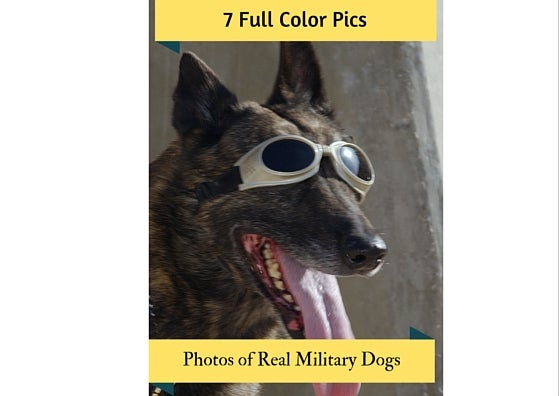 Image of 7 Full-Color Military Dogs Photos for Your Classroom