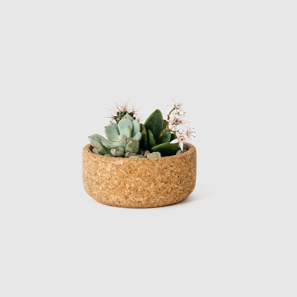 Image of Mini Cork Planter