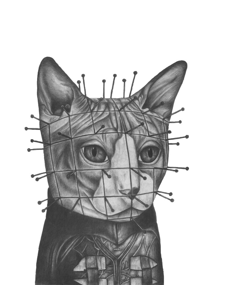 Image of Cat Pinhead