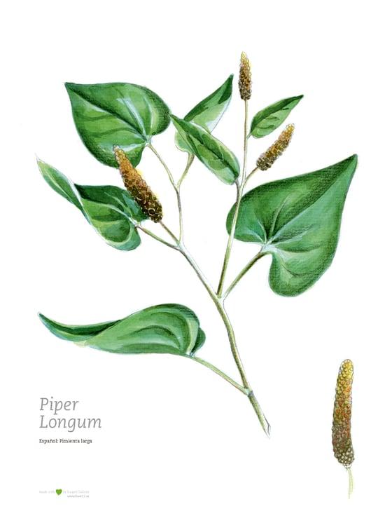 Image of Ilustración botánica | Pimienta