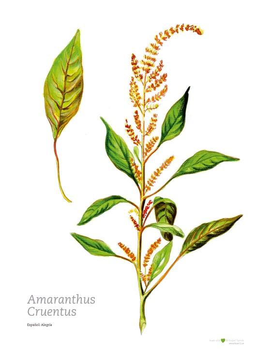 Image of Ilustración botánica | Alegría