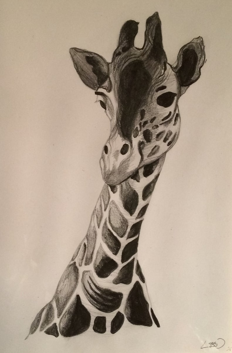 Giraffe pencil sketch