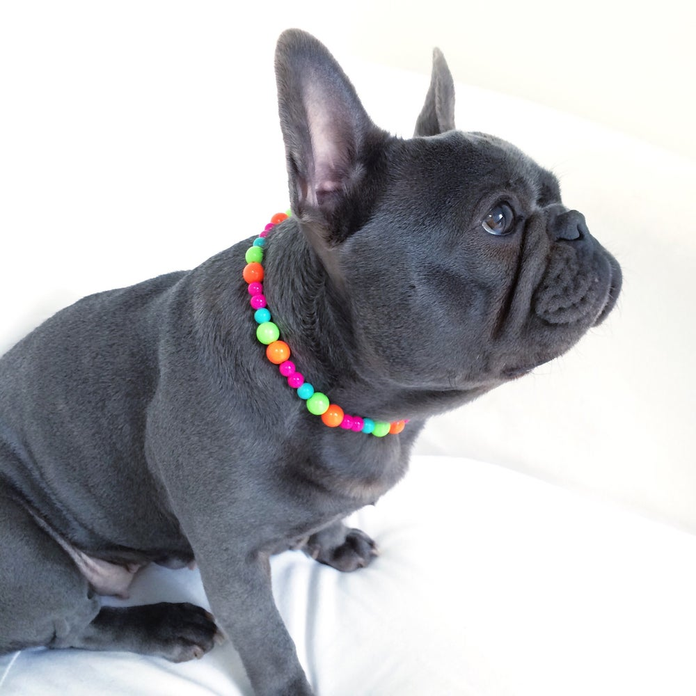 Image of Sweet Shop ~ Orange, Lime, Turquoise & Hot Pink Beaded Dog-Necklace