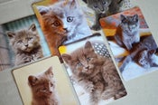 Image of  Set of Six Gray Kitten Postcards