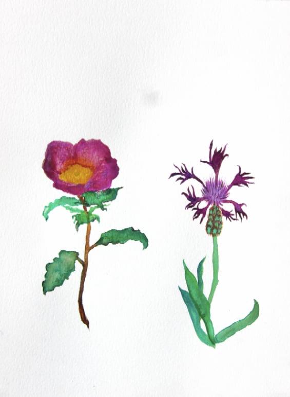Image of Greek Wild Flowers