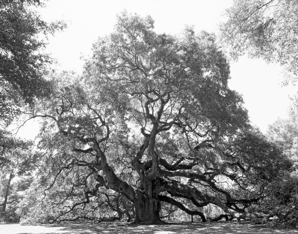 Image of Angel Oak