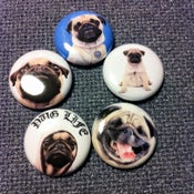 "Image of 5 - 1"" Pug buttons, magnets, flatbacks, or keychains."