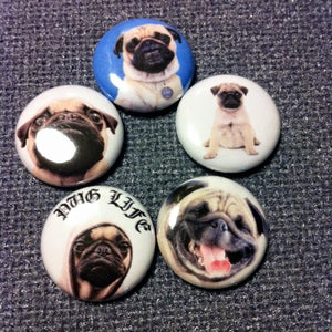 """Image of 5 - 1"""" Pug buttons, magnets, flatbacks, or keychains."""