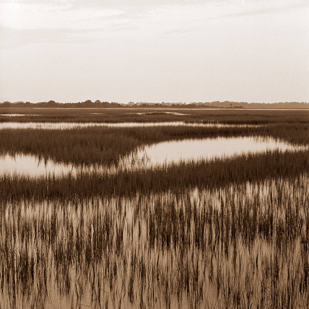 Image of Lowcountry marsh
