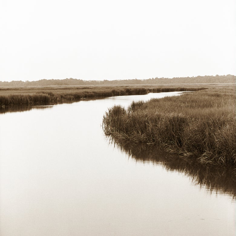 Image of James Island marsh