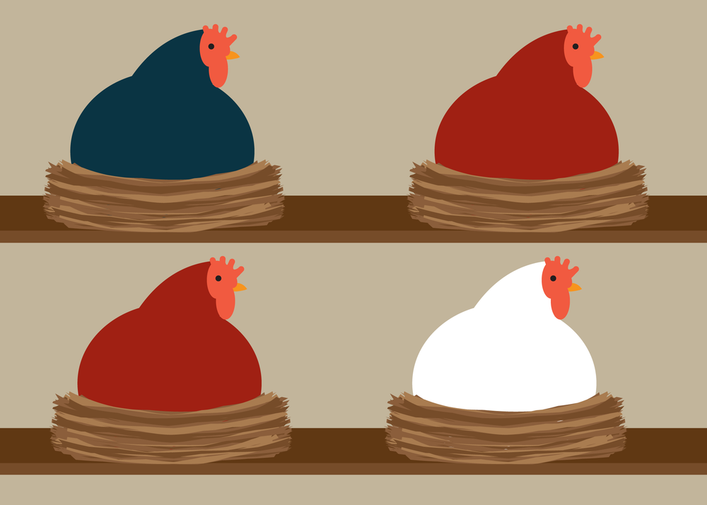 Image of Chicken Collections