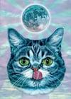 Lunar BUB