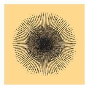 Image of Flowerlines - Carpobrotus glaucescens