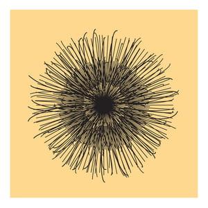 Image of Flowerlines - Centaurea nigra