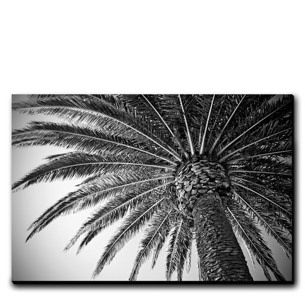 Image of PALM VIBES