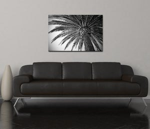 Image of PALM VIBES - (Metal or Canvas)