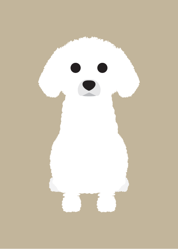 Image of Toy Poodle  Collection