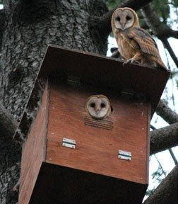 Image of Owl Nesting Box