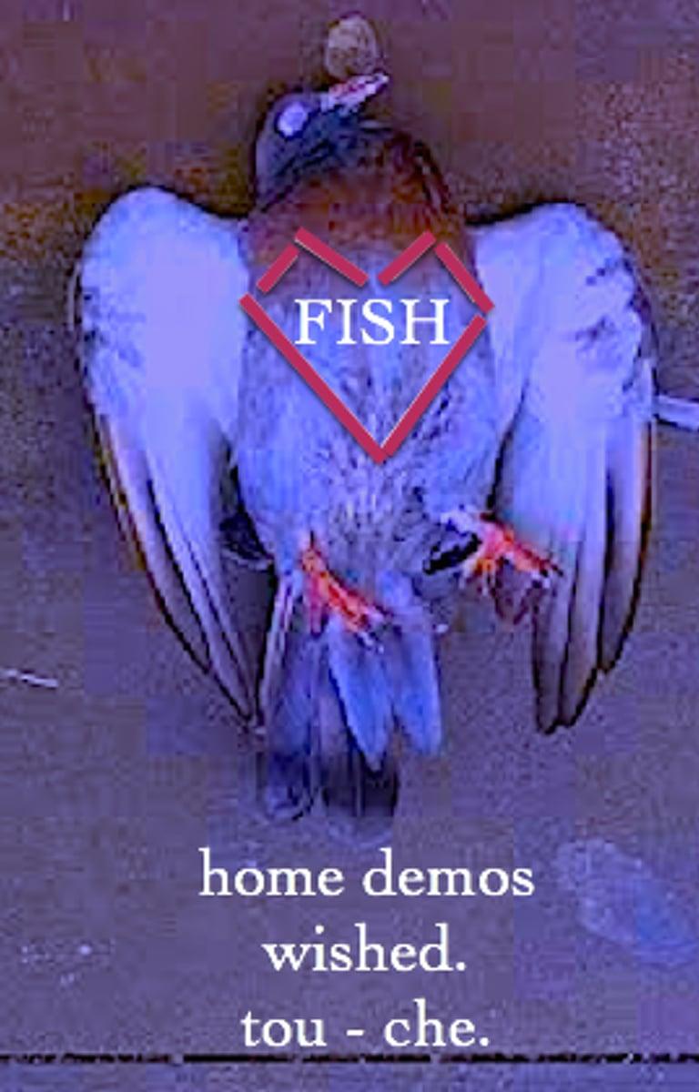 Image of FISH - home demos