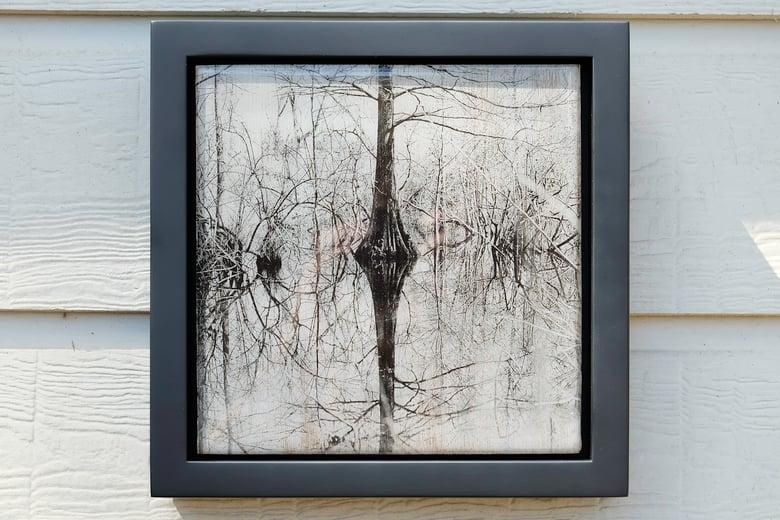 Image of Cypress Swamp (2016)