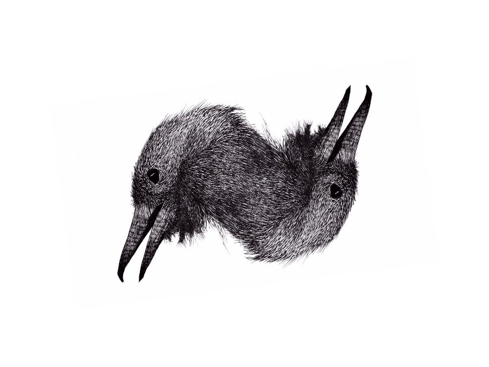 Image of Two faced crow