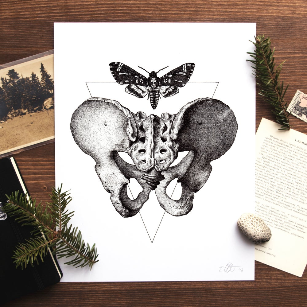 Image of Acherontia Atropos / Os Pubis Print