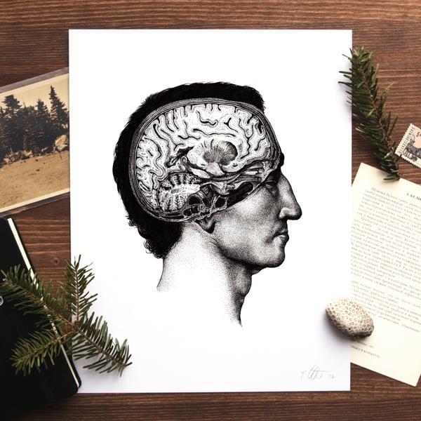Image of Cerebrum Print