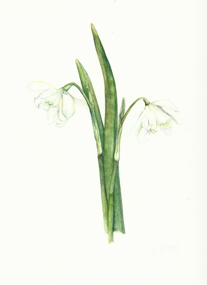 Image of Snowdrop - Greeting card