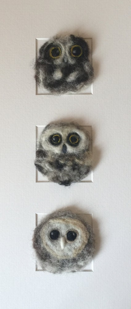 "Image of ""Three in a Box Owls"""