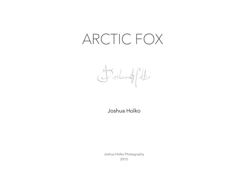 Image of Arctic Fox Portfolio