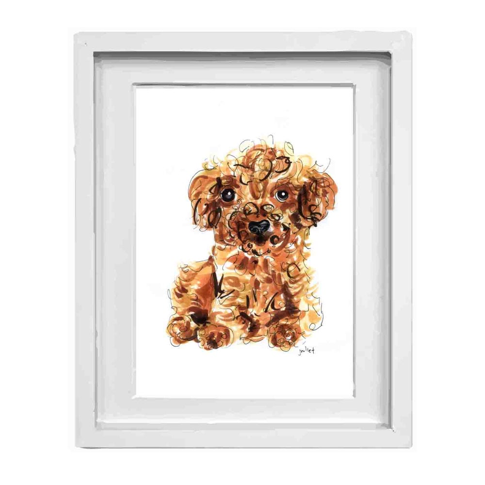 Image of Toy Poodle