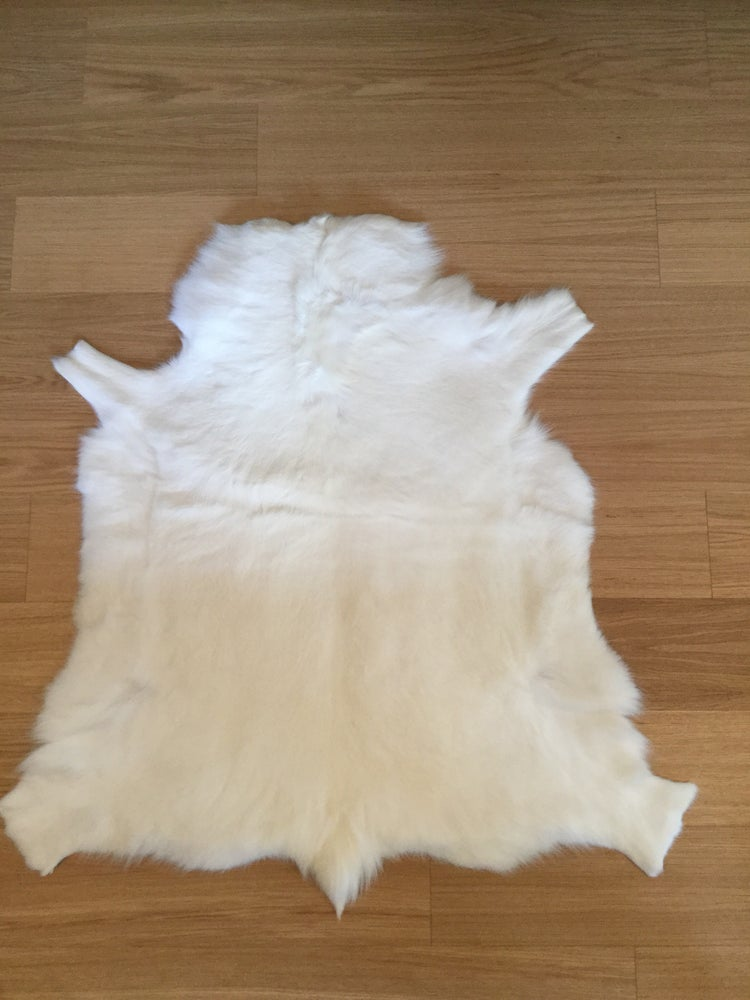 Image of ALBINO REINDEER HIDE 1637