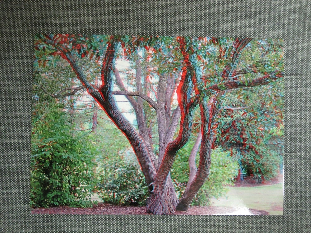 Image of 3d postcard - willow tree